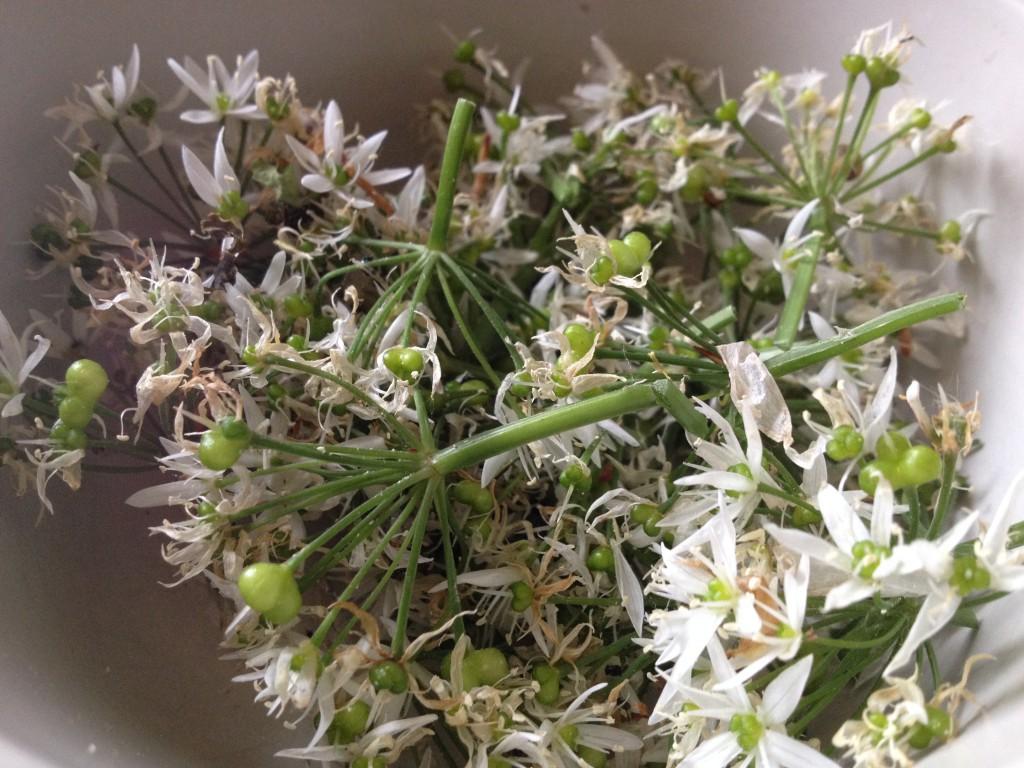 Bärlauch-Blüten und Bärlauch-Samen (Copyright: wilderwegesrand.de)