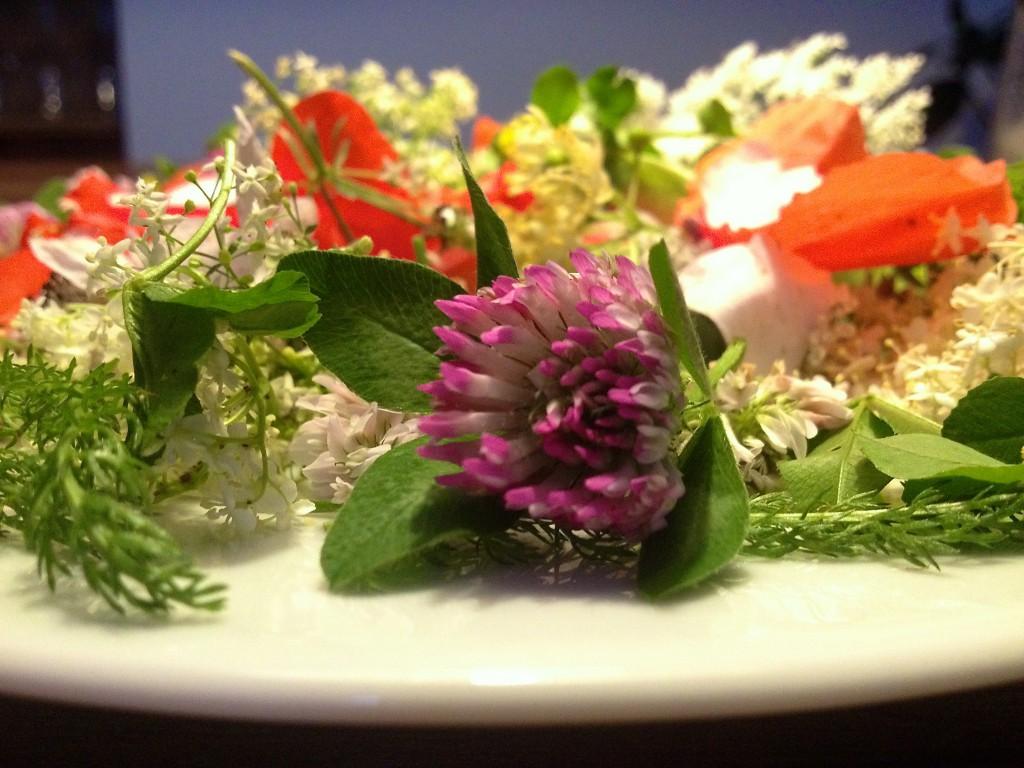 Blütentee aus Juni-Wildblumen (Copyright: wilderwegesrand.de)