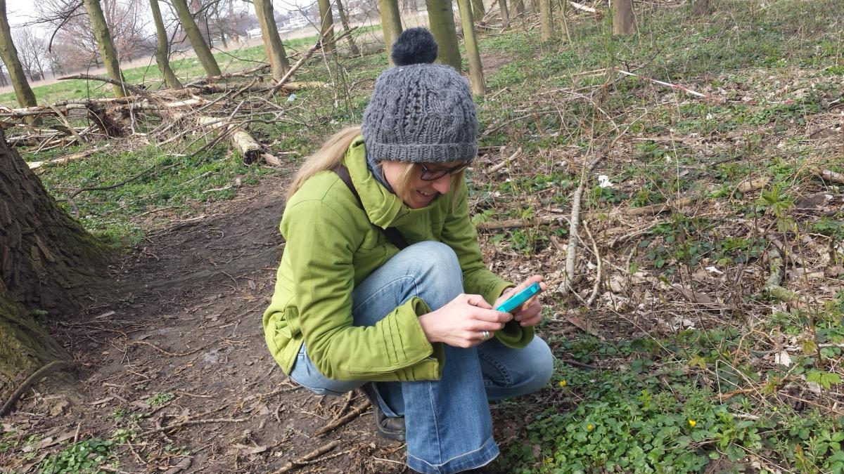 Scharbocksraut: ein gern gesehener Frühlingsbote am Waldboden