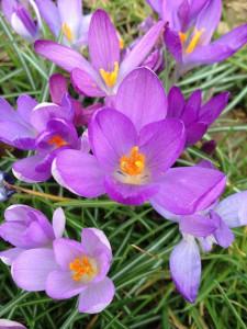 Vorboten des Frühlings!